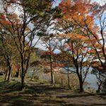 箱根の紅葉を日帰りで楽しむ!子供も喜ぶドライブコースはこれ!