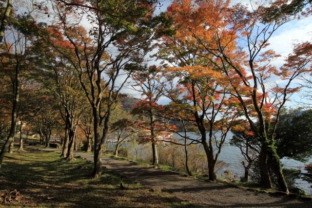ashinoko-kouyou