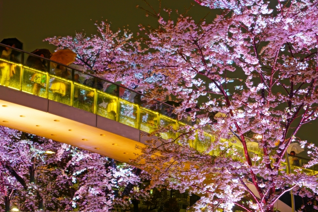 midtown-sakura