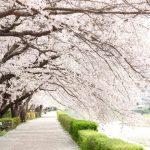 桜を見ながらお散歩したい神奈川のおすすめスポット紹介