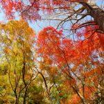 鎌倉の紅葉の見頃はいつ?絶対行きたいおすすめスポットご紹介
