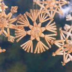 日比谷のクリスマスマーケットの開催時間は?混雑具合やおすすめ情報
