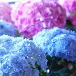 母の日に人気の鉢植えを贈ろう!育てやすいおすすめはコレ