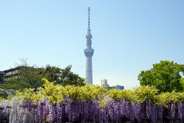 fuji-skytree