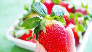 イチゴ狩りへ行こう!三浦半島のおすすめスポット紹介!